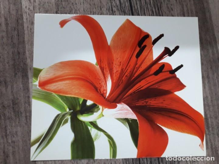 Fotografía antigua: Fotografías florales - Foto 9 - 195370461