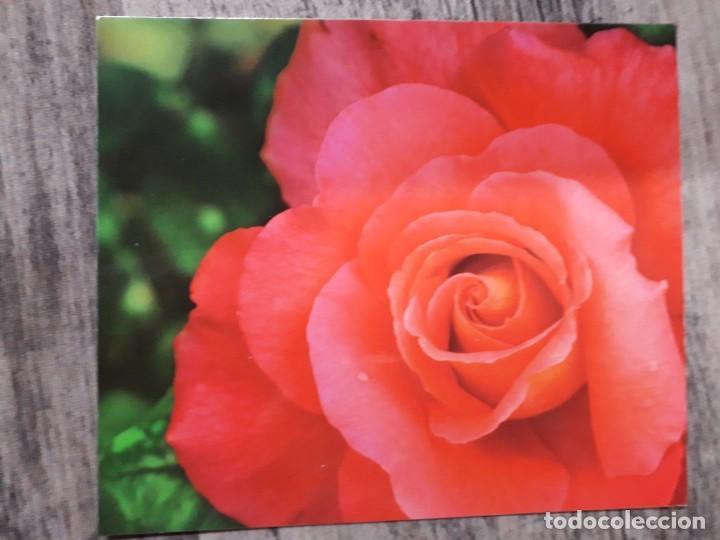 Fotografía antigua: Fotografías florales - Foto 10 - 195370461