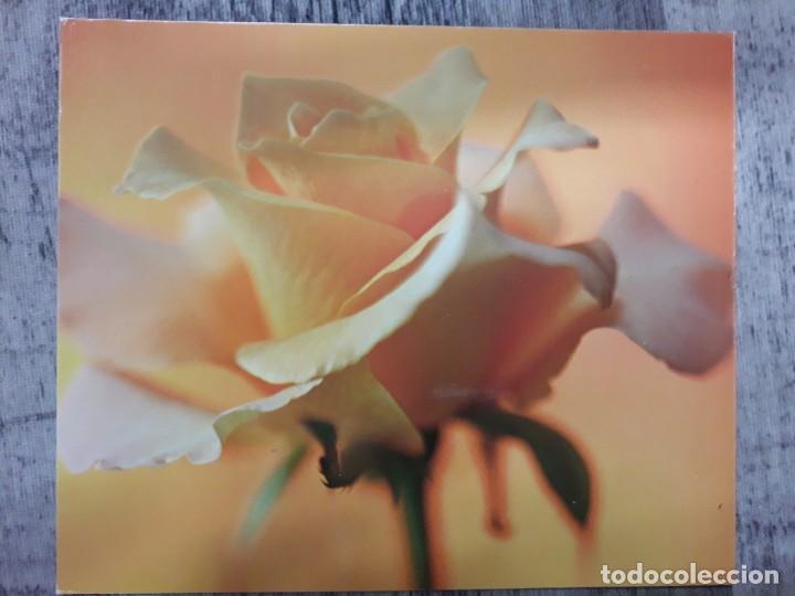 Fotografía antigua: Fotografías florales - Foto 11 - 195370461