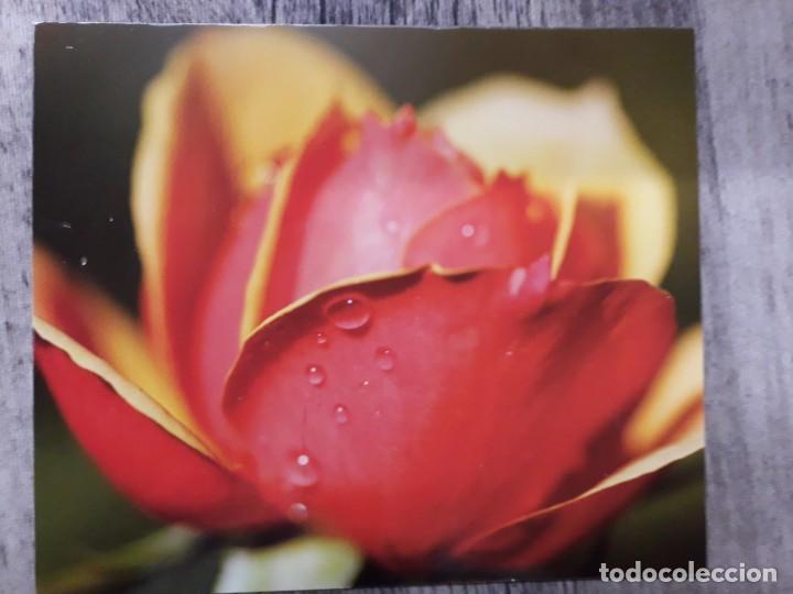 Fotografía antigua: Fotografías florales - Foto 13 - 195370461