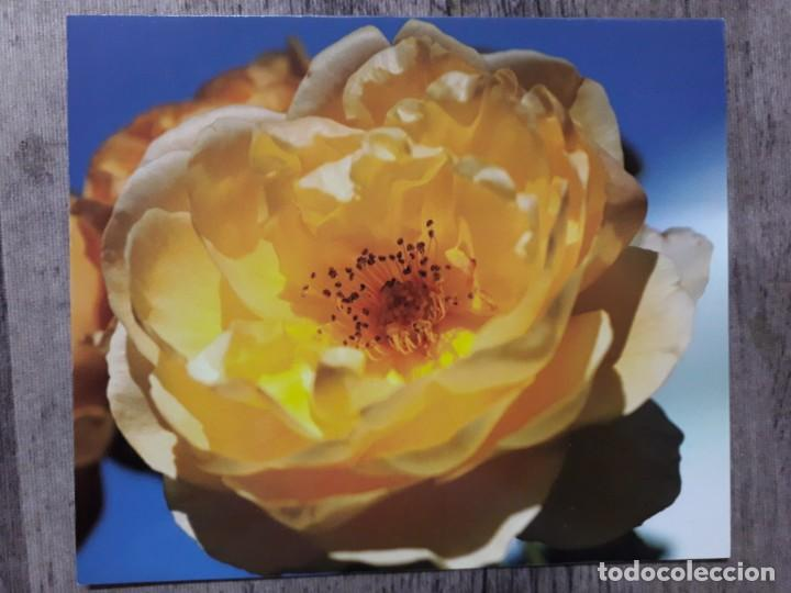 Fotografía antigua: Fotografías florales - Foto 14 - 195370461