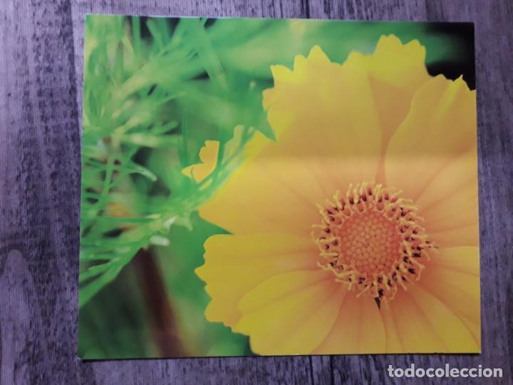 Fotografía antigua: Fotografías florales - Foto 15 - 195370461