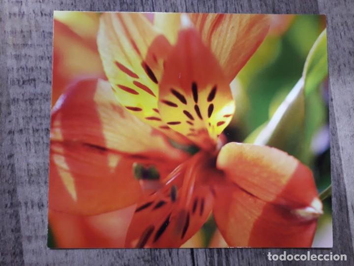 Fotografía antigua: Fotografías florales - Foto 16 - 195370461