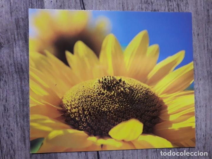 Fotografía antigua: Fotografías florales - Foto 18 - 195370461
