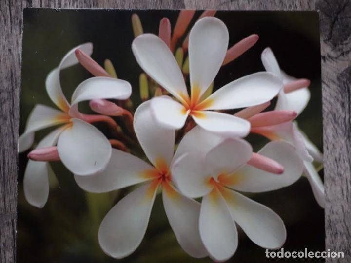 Fotografía antigua: Fotografías florales - Foto 20 - 195370461
