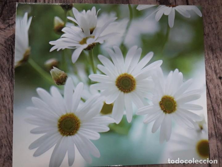 Fotografía antigua: Fotografías florales - Foto 21 - 195370461