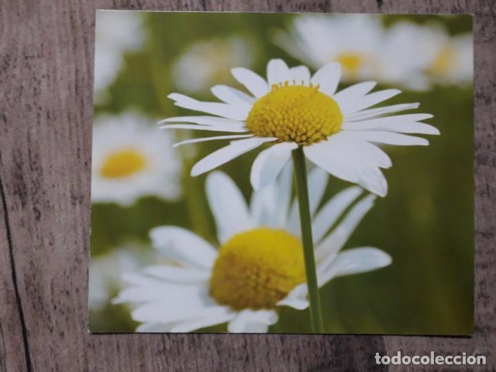 Fotografía antigua: Fotografías florales - Foto 24 - 195370461