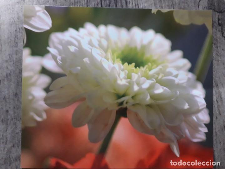 Fotografía antigua: Fotografías florales - Foto 26 - 195370461
