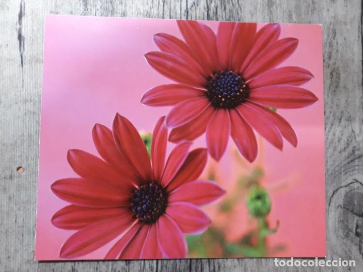 Fotografía antigua: Fotografías florales - Foto 27 - 195370461