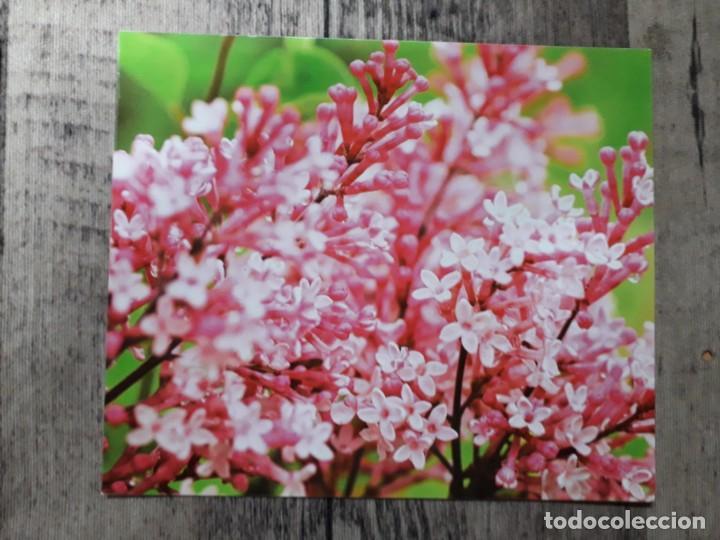 Fotografía antigua: Fotografías florales - Foto 28 - 195370461