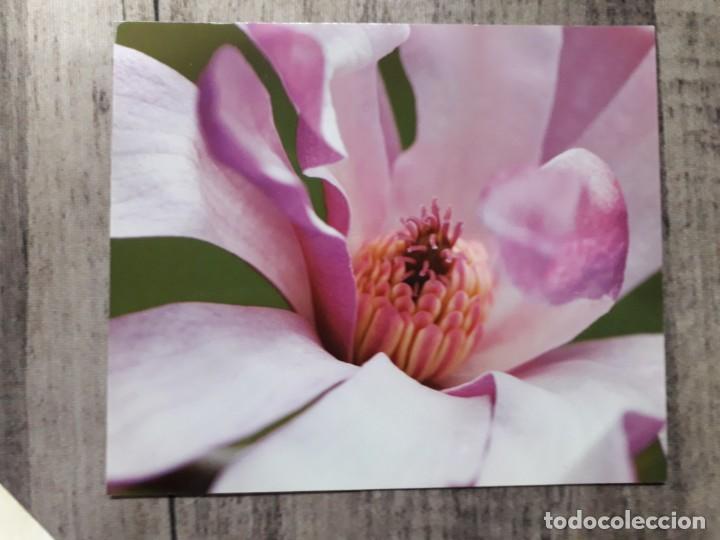 Fotografía antigua: Fotografías florales - Foto 29 - 195370461