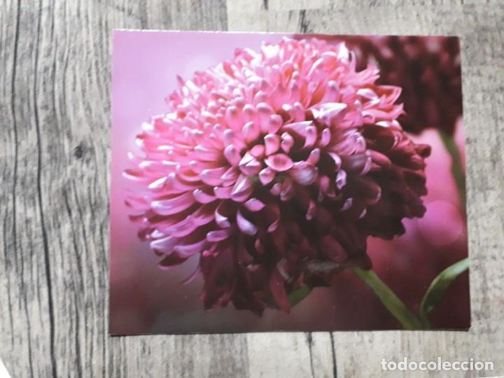 Fotografía antigua: Fotografías florales - Foto 30 - 195370461