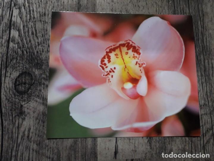 Fotografía antigua: Fotografías florales - Foto 31 - 195370461
