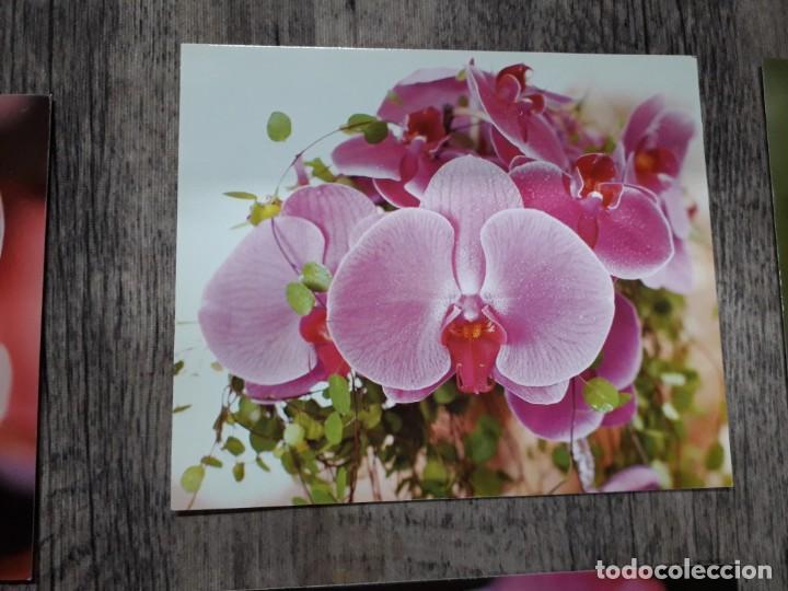 Fotografía antigua: Fotografías florales - Foto 32 - 195370461