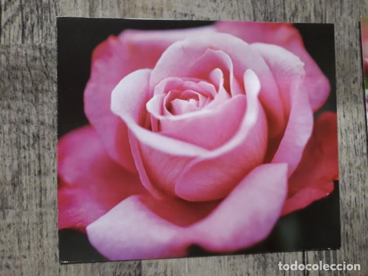 Fotografía antigua: Fotografías florales - Foto 33 - 195370461