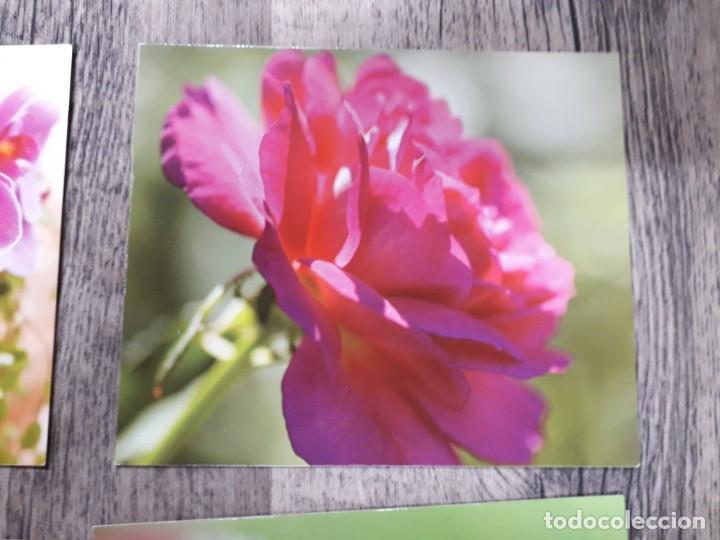 Fotografía antigua: Fotografías florales - Foto 35 - 195370461