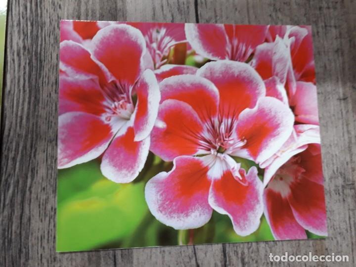 Fotografía antigua: Fotografías florales - Foto 36 - 195370461