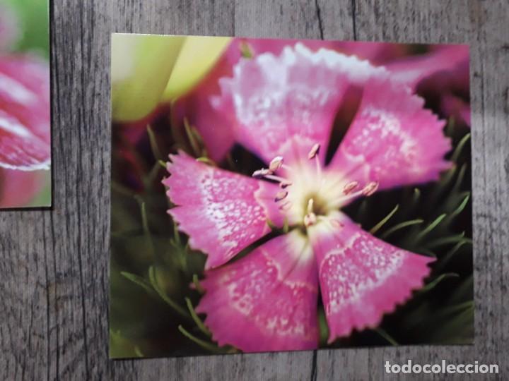 Fotografía antigua: Fotografías florales - Foto 37 - 195370461