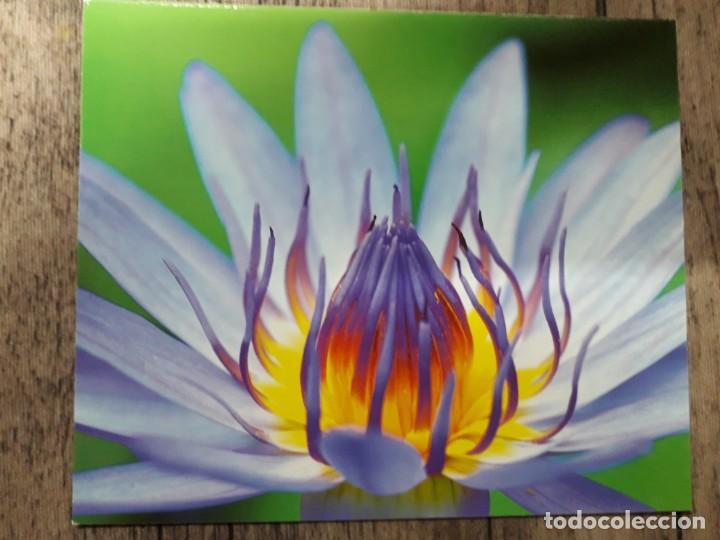 Fotografía antigua: Fotografías florales - Foto 38 - 195370461