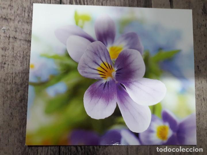 Fotografía antigua: Fotografías florales - Foto 39 - 195370461