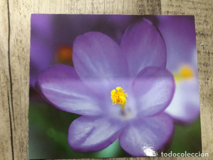 Fotografía antigua: Fotografías florales - Foto 40 - 195370461