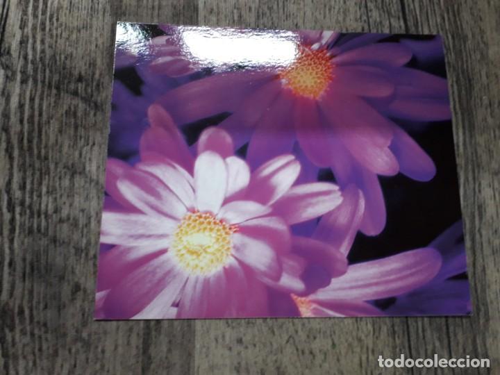 Fotografía antigua: Fotografías florales - Foto 43 - 195370461