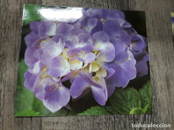 Fotografía antigua: Fotografías florales - Foto 44 - 195370461