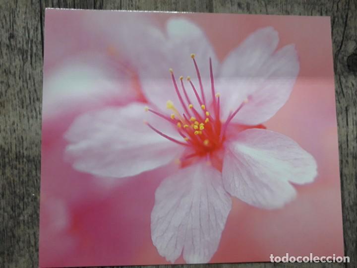 Fotografía antigua: Fotografías florales - Foto 45 - 195370461