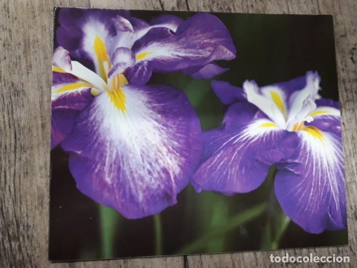 Fotografía antigua: Fotografías florales - Foto 50 - 195370461