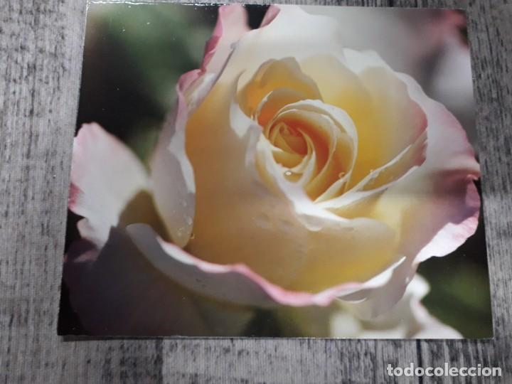 Fotografía antigua: Fotografías florales - Foto 52 - 195370461