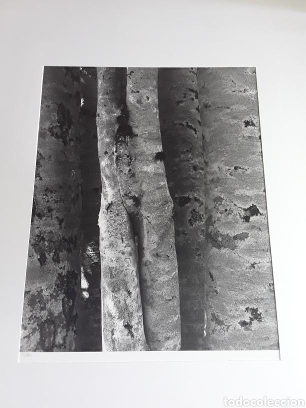 Fotografía antigua: CUERVO-ARANGO 73/100, certificado por la galería Spectrum(zaragoza),en buen estado - Foto 2 - 201181681