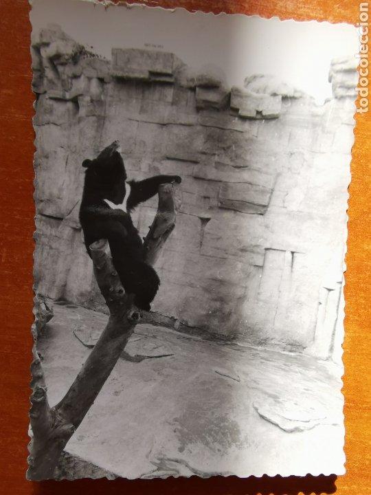 Fotografía antigua: 8 fotografías del Zoo de Barcelona de 1950s 1960s - Foto 2 - 254253960