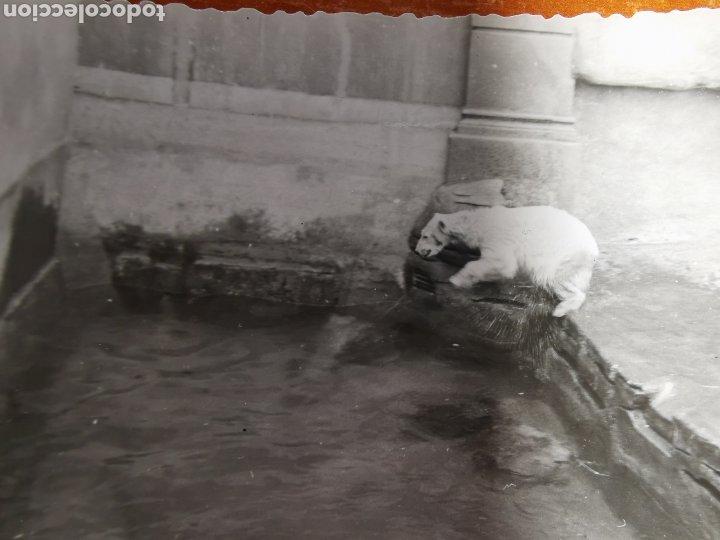 Fotografía antigua: 8 fotografías del Zoo de Barcelona de 1950s 1960s - Foto 3 - 254253960