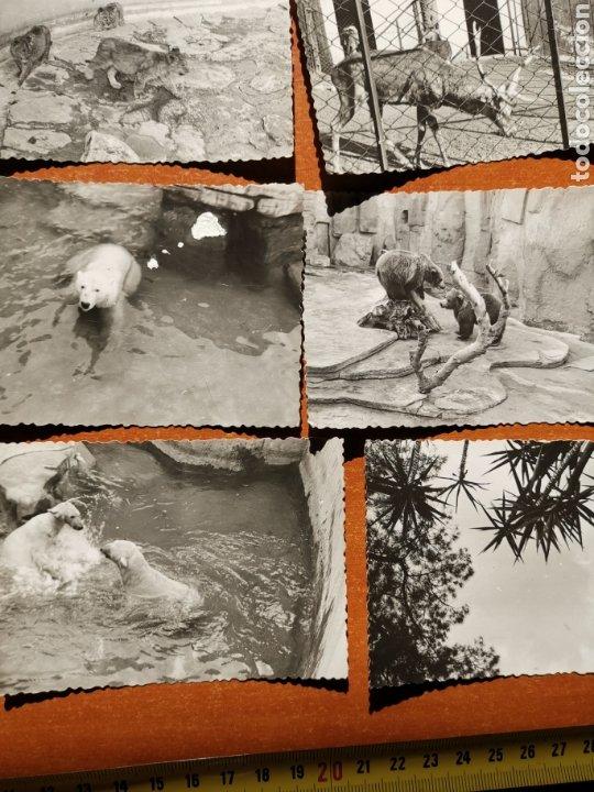 Fotografía antigua: 8 fotografías del Zoo de Barcelona de 1950s 1960s - Foto 4 - 254253960