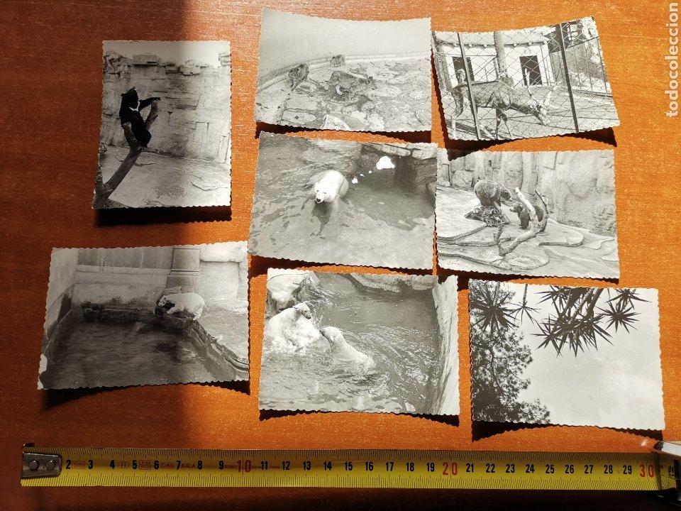 8 FOTOGRAFÍAS DEL ZOO DE BARCELONA DE 1950S 1960S (Fotografía - Artística)