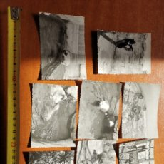Fotografía antigua: 8 FOTOGRAFÍAS DEL ZOO DE BARCELONA DE 1950S 1960S. Lote 254253960