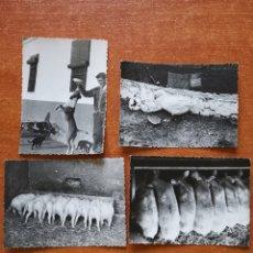Fotografía antigua: FOTOGRAFÍAS DE GRANJA DE CERDOS, 1950S 1960S. Lote 257349735
