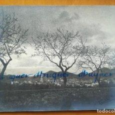 Fotografía antigua: PANORÀMICA ARTÍSTICA DE LA VIL·LA DE FALSET. SIGNADA PER RAMÓN PI. CA 1930, 29X23 CM.. Lote 260355315