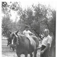 Fotografía antigua: *** CU1177 - FOTOGRAFIA - NIÑITO MONTADO EN UN EQUINO - BETERA 1955. Lote 287816653