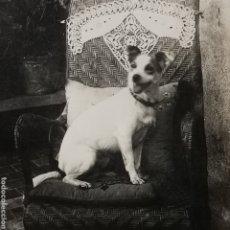Fotografía antigua: POST CARD FOTOGRÁFICA DE PERRO DE LOS AÑOS 1920S. Lote 288966698