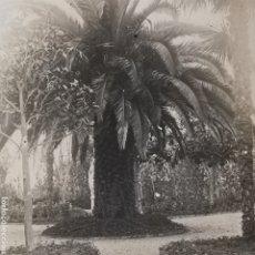 Fotografía antigua: FOTOGRAFÍA DE ÁRBOL, PALMERA MONUMENTAL, DE JARDÍN DESCONOCIDO. 1920S. Lote 288967828