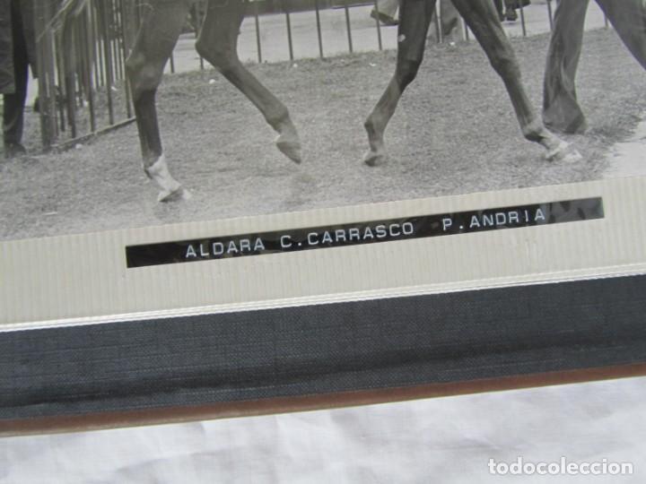 Coleccionismo deportivo: 2 álbumes de fotos de hípica años 70. Ver fotografías adicionales - Foto 25 - 158809614