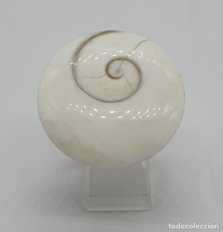 Joyeria: Magnífico anillo de diseño en plata de ley contrastada con gran ojo de shiva autentico . - Foto 2 - 184210747
