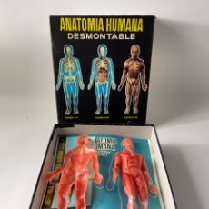 Joyeria: JUEGO ANATOMIA HUMANA DESMONTABLE. SERIMA. MEDIADOS S.XX.. Lote 265883743