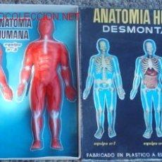 Juegos antiguos: ANATOMÍA HUMANA DE SERIMA. Lote 26541239