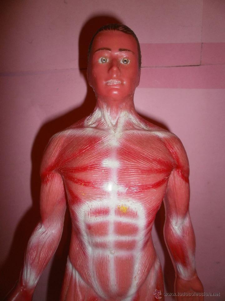 muñeco de anatomia humana primera generación - Comprar Juegos ...
