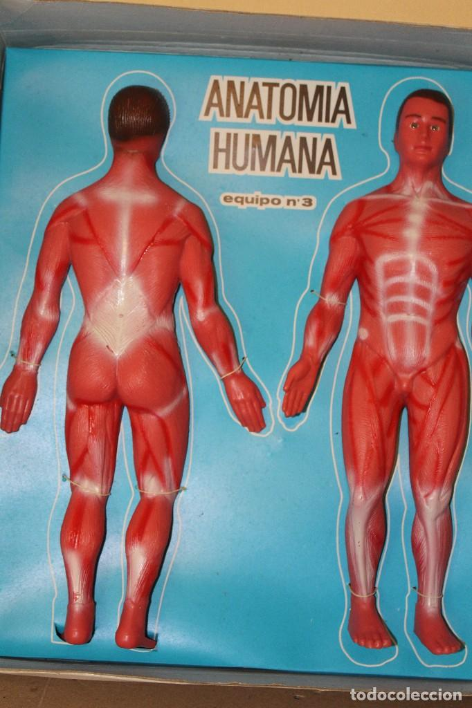 anatomía humana. de serima. nº 4. a estrenar, d - Comprar Juegos ...