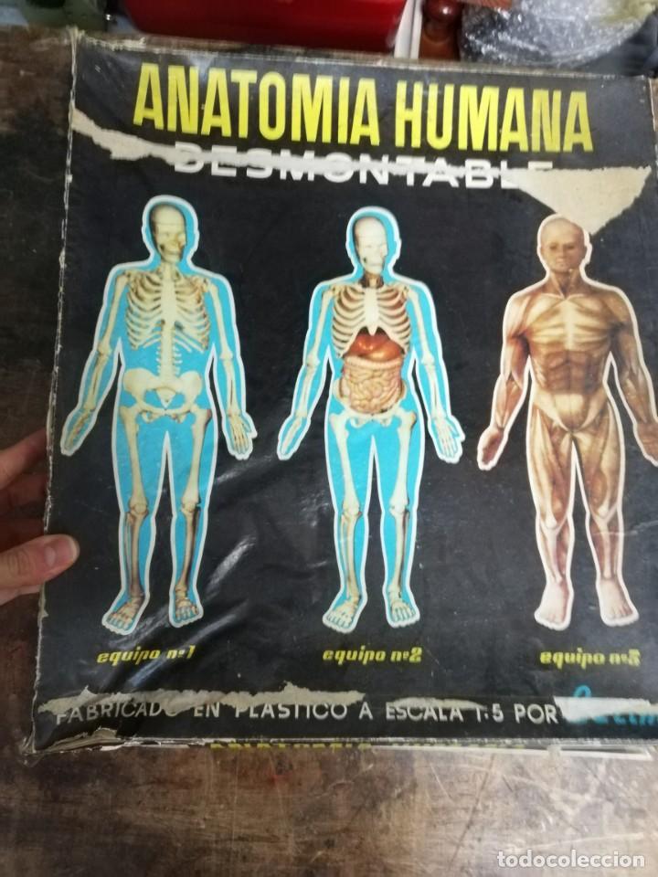 Juegos antiguos: Juego Anatomía humana con instrucciones, caja mal estado. Ver fotos. - Foto 5 - 150569502