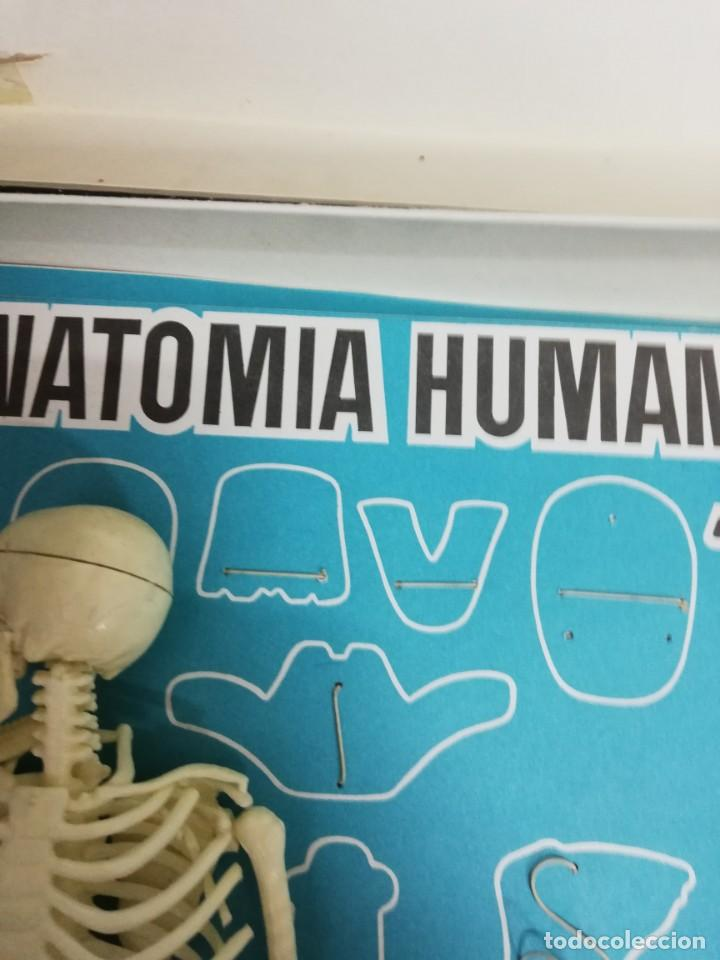 Juegos antiguos: Juego Anatomía humana con instrucciones, caja mal estado. Ver fotos. - Foto 7 - 150569502