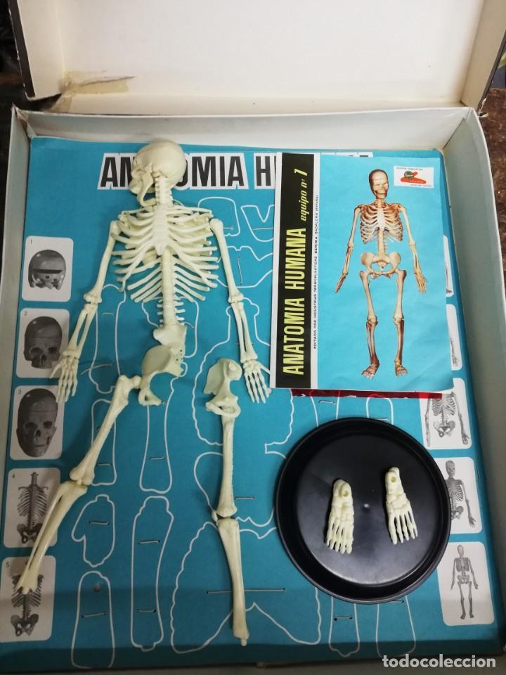 Juegos antiguos: Juego Anatomía humana con instrucciones, caja mal estado. Ver fotos. - Foto 8 - 150569502